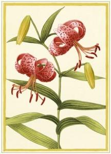 Восточные лилии (гибриды)- сорта, фото, посадка и уход