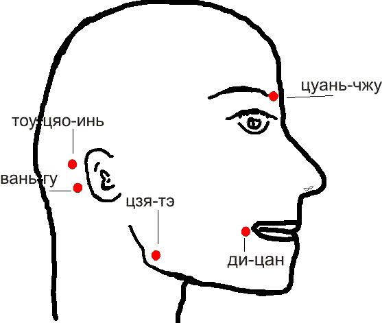 Куда ставить пиявки в косметологии: точки и схемы при подтяжке лица